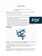 EL PROTOPLASMA - copia.docx