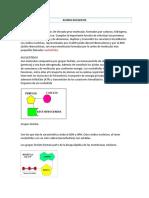 ACIDOS NUCLEICOS 2.docx