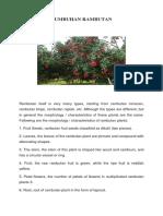 Tumbuhan Rambutan