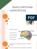 Áreas Corticais e Cognição