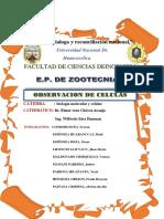 informe  de reconocimiento celular.docx
