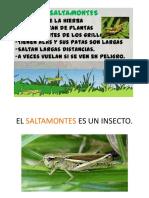 SaltaMontes