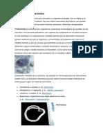 Acerca de los parásitos.docx