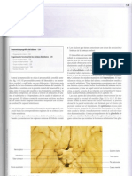 Neuroanatomía.Cap 12. Talamo