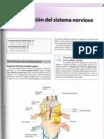 Neuoanatomía.Cap 7. Vascularizacion Del Sistema Nervioso Central
