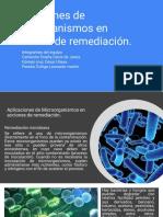 Aplicaciones de Microorganismos En