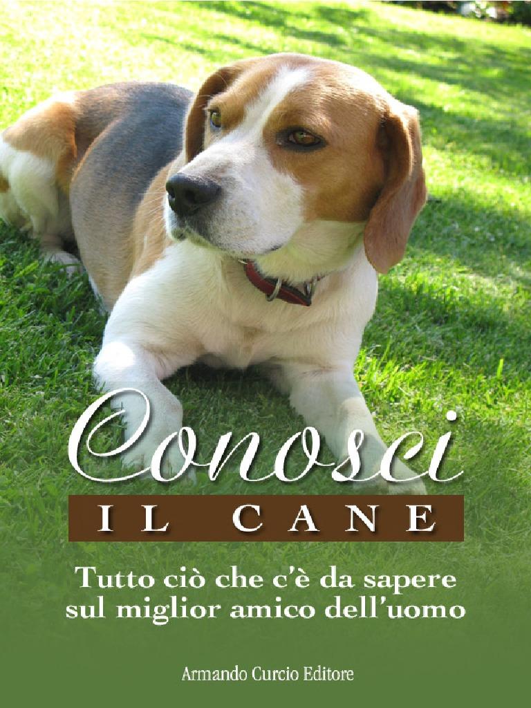 Grande Rottweiler Misura n 34/Lunghezza 12/cm Circonferenza 43/cm Dino Museruola in Cuoio per Il Cane