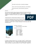 albahaca.pdf