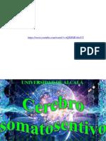 Cerebro_somatosensitivo.pdf
