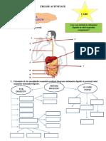 Fisă Sistem Digestiv