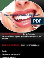 1 Macro Anatomia Del Periodonto