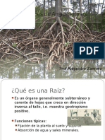 Raíces de Angiospermas.pdf