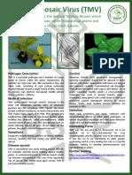 TMV.pdf