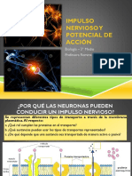 Sinapsis e Impulso Nervioso