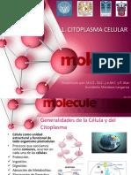 1. Citoplasma Celular
