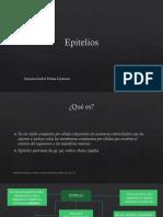 epitelio-