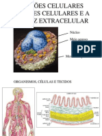 Juncoes e Adesao Celular e Matriz Extracelular