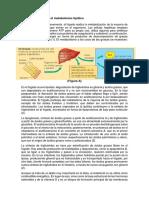 Fisiologia Sem 2-p3