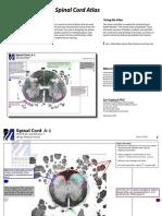 gagliardi_spinal_cord.pdf