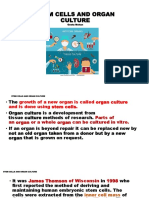 Stem Cells and Organ Culture Ppt