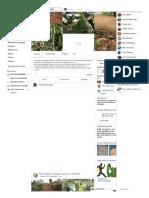 PLANTATION Avocats + Un verger d'avocatiers greffé de plus de 2... - Samuel Nguedia Ngougni