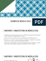 13 EXAMEN DE MEDULA OSEA.pptx