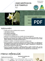 Evaluación de Las Fases Meióticas en Microesporangios de Solanum Hirtum
