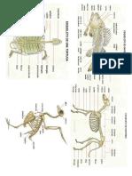 Esqueleto de Los Reptiles