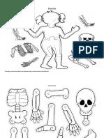 Fichas de Los Sistemas Del Cuerpo Humano
