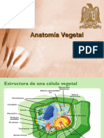 4 Anatomía Vegetal
