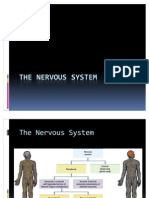The Nervous System12