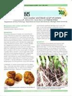 Michigan Potato Diseases - Rhizoctonia Stem Canker and Black Scurf of Potato (E2994)