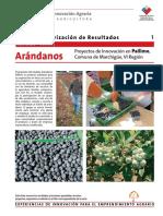 1 Ficha ArandanosPailimo