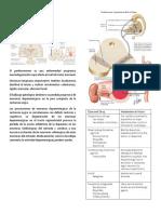 Anti parkinsonianos.docx