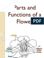 MAIN PPT Parts and Functions of a Flower Ppt