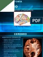 cerebro y areas de brodman