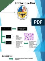 Neutrofilos y Macrofagos