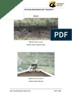 Especies de Fauna Registradas Del Paquete 4