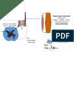 reflexe osteotendinoase.docx