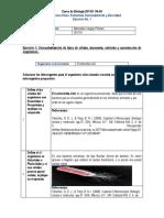 Ejercicio1_Unidad1_ MercedesVargas.docx