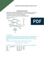 Metabolismo de los lípidos.docx
