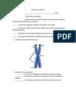 PRACTICA DE GENETICA.docx