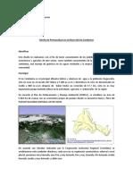 diseño de permacultura.docx