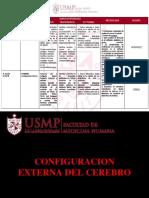 (03) HEMISFERIOS CEREBRALES...