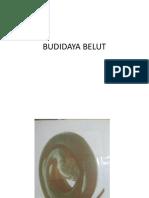 BUDIDAYA BELUT.pptx