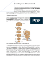 The descending tracts of the spinal cord.docx