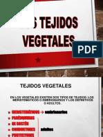 2.1.6 Fibras Vegetales