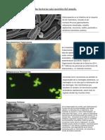 Ejemplos de Bacterias