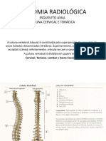 Anatomia Radiológica i Parte 2