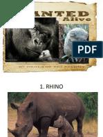 Endangered animals.pptx